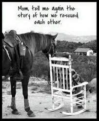 Die 225 Besten Bilder Von Pferde Sprüche Zitate Und Gedichte