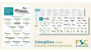 Fsc Fold Out Id Chart Caterpillars Identification Chart