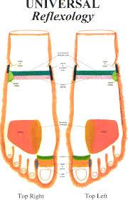 Reflexology Chart Top Of Foot Expository Top Of The Foot Reflexology Chart Foot