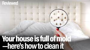 your house is full of mold here s how