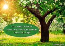 La Citation Du Jour Par Vincent Van Gogh Claire Thomas Medium