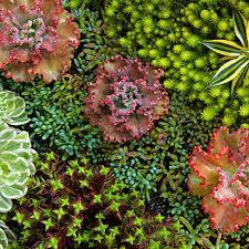 Small Picture Garden Design Garden Design with Succulent Garden Extravaganza