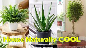 great office plants. Amazing Cool House Plants From Maxresdefault Great Office