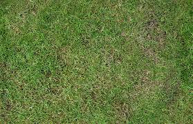dirt grass texture seamless. Grass Clean Texture Dirt Seamless