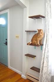 shelves for cats plaster disaster