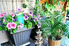 epsom salts in garden salt in the garden home and garden uses for salt by readers
