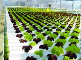 hydroponics garden. Hydroponic Gardening Has Become A Favorite Pastime For Many People Who Like To Eat Fresh Vegetables All Year Round. Right From Novice Gardeners Hydroponics Garden