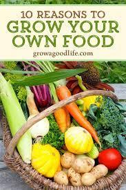 10 reasons to grow a vegetable garden