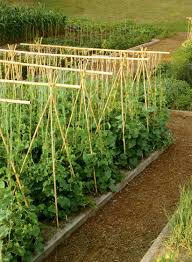 bamboo garden stakes. Perfect Bamboo Raise Garden Using Both Bamboo Poles And Stakes To Support Plants And Bamboo Garden Stakes R