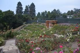 berkeley rose garden berkeley ca usa picture 25 of 25