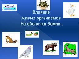 Презентация по географии Влияние живых организмов на биосферу  Влияние живых организмов На оболочки Земли