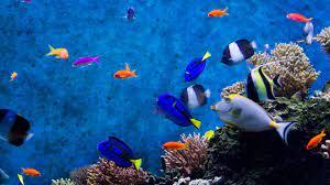 Aquarium Computer Wallpapers ...