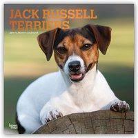 Jack Russell Terriers 2019 16 Monatskalender Mit Freier