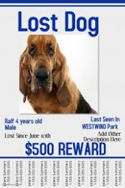 Lost Pet Flyer Maker Customizable Design Templates for Lost Animal PosterMyWall 79