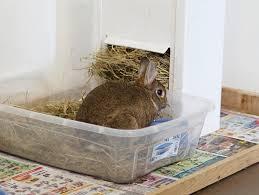 litter training your pet rabbit my