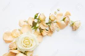 Beautiful Roses Of Tender Colors Represented Over White Background