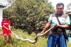 Seperti yang sudah dijelaskan di atas, ular masuk ke dalam rumah karena ingin memburu mangsanya. Tabur Garam Untuk Cegah Ular Masuk Rumah Hanya Mitos Ini Cara Yang Benar