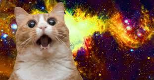 15 Best Cat Memes Ever via Relatably.com