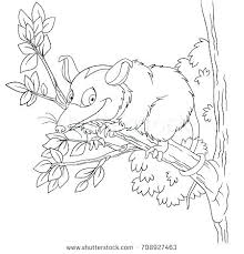 Farm Animals Coloring Pages To Print River Possum Coloring Pages