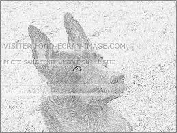Imprimer Animaux Chien Num Ro 426452