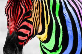 rainbow animal wallpaper. Exellent Wallpaper Zebra And Animal Image For Rainbow Animal Wallpaper H