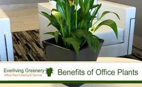 office greenery. Perfect Greenery Green Office Plant  Benefits Of Plants In The Chicago Rental Intended Greenery