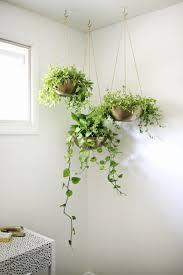 Indoor Garden Ideas - Hang Your Plants From The Ceiling & Walls //  Customize your