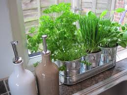 Kitchen Herb Garden Indoor How To Grow Indoor Herb Garden Ideas
