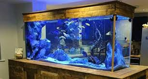 office aquarium. health benefits of having a fish aquarium in your home or office kenneth ngeso jr pulse linkedin