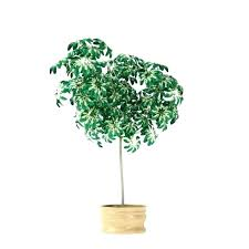 tall best large houseplants house plants safe for pets potted indoor home and offices balcony garden