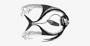 t shirt tropical fish drawing moorish idol fish 5 x7 area rug