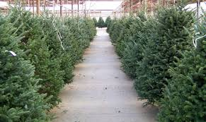 From November 24- December 10, Find the perfect holiday wreath or tree for  your home at our Christmas Tree Lot, hosted by Lenderink Tree Farms.