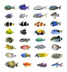 different types of fish. diffe kinds of aquarium fish emilyevanseerdmans different types -