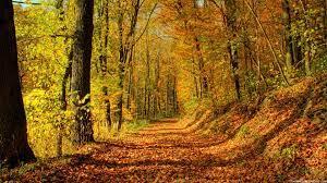 76+] Free Autumn Wallpaper Backgrounds ...