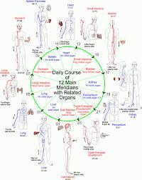 meridians Meridian Lines Body Map the meridian clock meridian lines body map