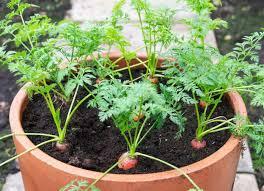 container veg gardening 30 edibles to