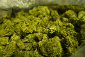 fancy word for green 420 day why there are 1 000 slang terms for marijuana time