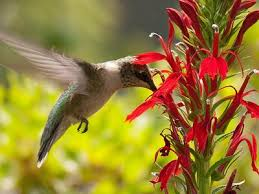 images of flowers and birds.  And Flowers With Nectar To Attract Hummingbirds Attracting Wild Birds In Images Of And E