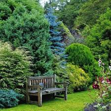 Small Picture The 25 best Evergreen garden ideas on Pinterest Evergreen