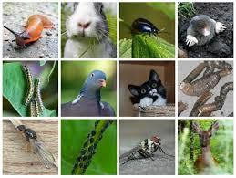 vegetable garden pests