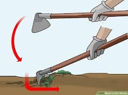 image led hoe weeds step 4