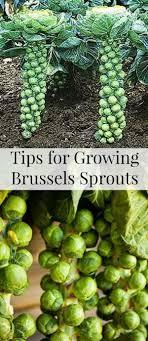 Kitchen Garden In Pots 17 Best Ideas About Container Vegetable Gardening On Pinterest