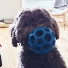 my chew happy dog cannot quit this rubber ball