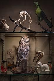 david sedaris the new yorker understanding owls