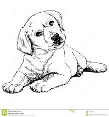 Immagini Di Cani Cuccioli Da Colorare Fredrotgans