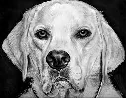 Disegni Di Cani Matita Migliori Pagine Da Colorare