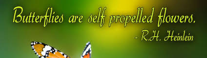 Butterfly Quotes Stunning Beautiful Butterfly Quote By RH Heinlein Butterflies Are Self