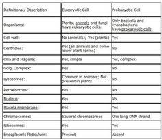 Prokaryotic And Eukaryotic Cells Chart 116 Best Cells Images Teaching Biology Teaching Science