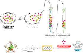 Purification And Characterization Of A Thermoalkaliphilic