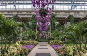 We do our best for our customers to get the best quality plants and as much resource and expert advise so that they keep their plants as beautiful and healthy. A View Unlike Any Other Orchid Extravaganza Longwood Gardens